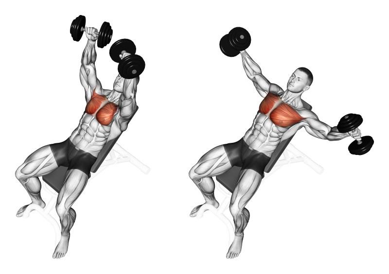 Croci con manubri su panca inclinata - esercizio per pettorali - Muscoli.info