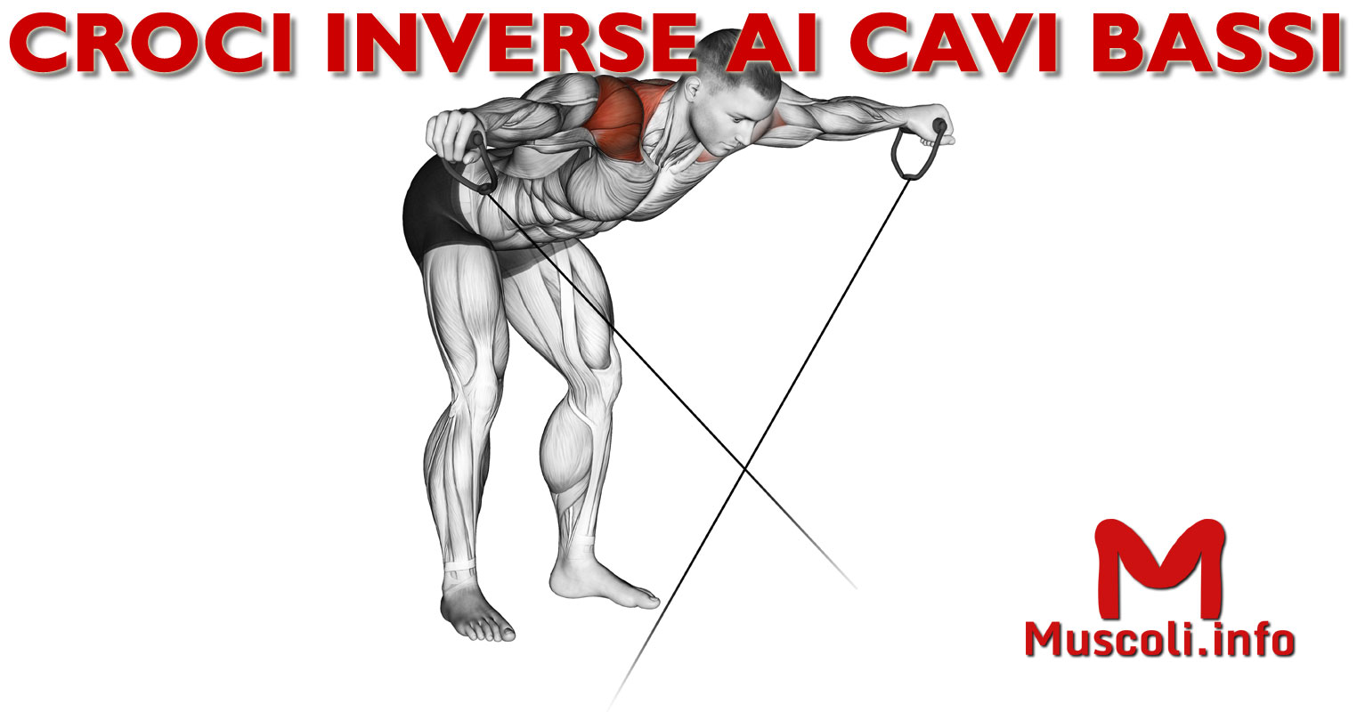fe6f0062c Croci inverse o alzate laterali ai cavi bassi in piedi con busto a 90° -  esercizio per deltoidi posteriori e dorsali - 💪 Muscoli.info