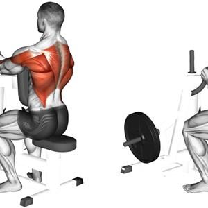 Esercizi Per Dorsali Muscoli Info