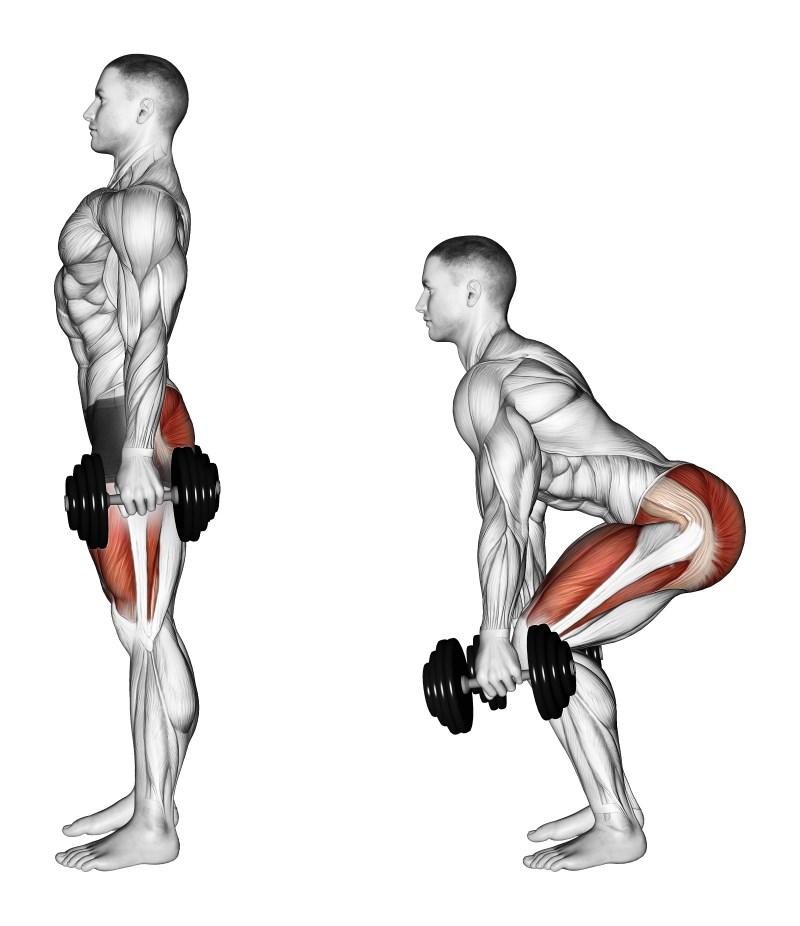 Squat Con Manubri Esercizio Per Gambe Muscoli Info